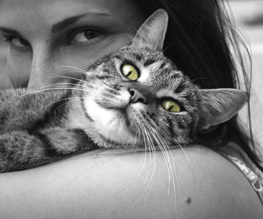 La trascendencia de jugar con tu gato