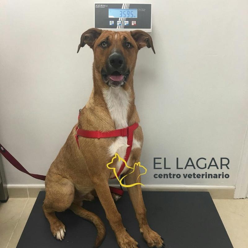 Medicina preventiva: Tratamientos y especilidades de Centro veterinario El Lagar