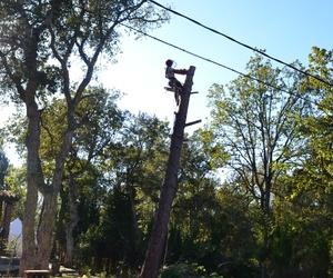 Poda de árboles en Girona