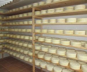 Venta de queso artesano cabrales en Asturias