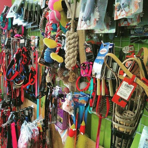 Venta de accesorios y complementos para animales: Productos y servicios de Perruqueria Canina Rex