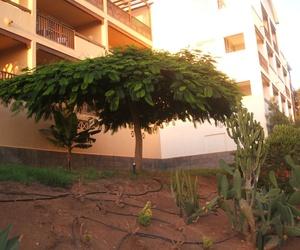 Casverde - Plantas y árboles