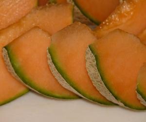 Cultivo de melón francés Charentais en Málaga