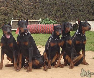 Adiestramiento de perros en Barcelona