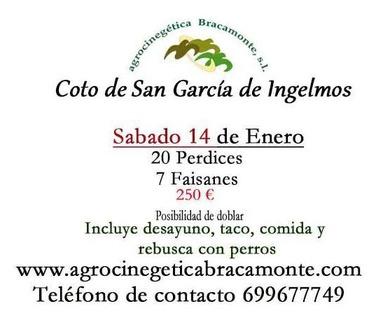 Ojeo de perdiz y Faisán en Salamanca. Coto de San García de Ingelmos. Sábado 14 de enero