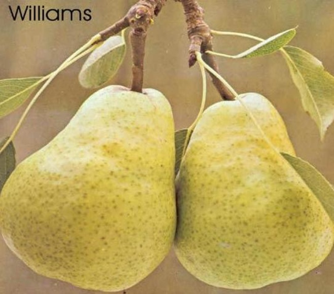 PERA WILIAMS. : Catálogo de La Despensa Ecológica