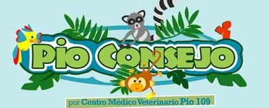 Nuestro blog en Todo Talavera
