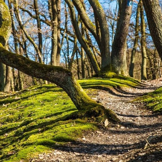 La importancia de cuidar los bosques