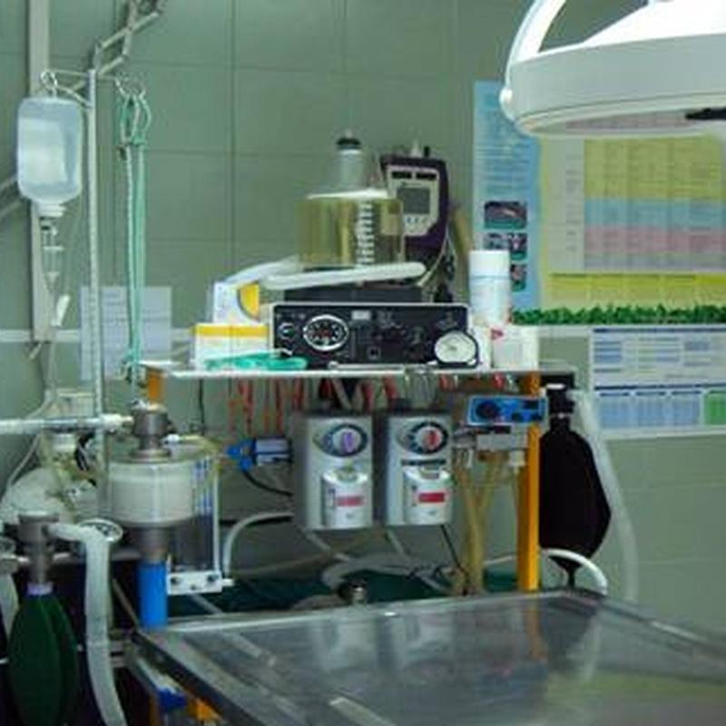 Cirugía: Servicios veterinarios de Centro Veterinario Ciudad de los Ángeles
