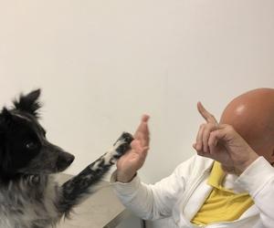 Galería de Especialistas en perros y gatos en Montcada i Reixac | Huellas Centro Veterinario