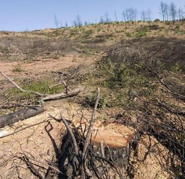Recuperación de bosques: Servicios de Leña Rubí