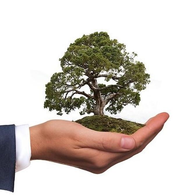 Materiales ecológicos contra el cambio climático