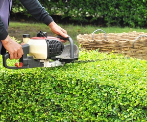 Servicio de jardinería en Córdoba