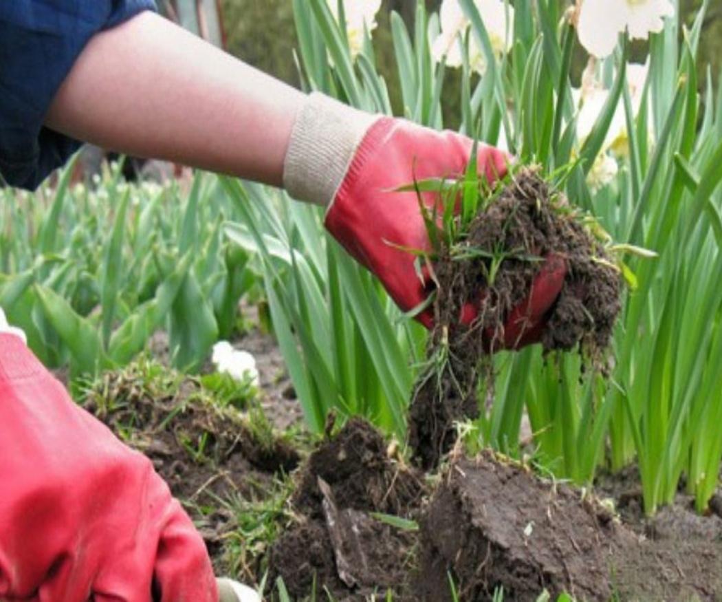 El mejor momento para plantar en el jardín