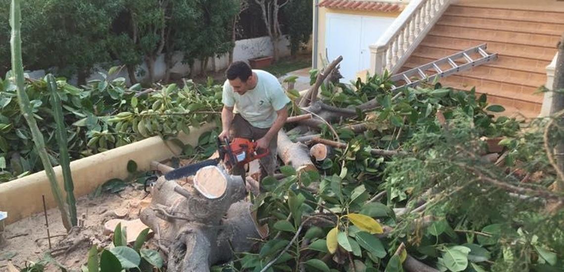 Diseño, construcción y mantenimiento de jardines en Llucmajor