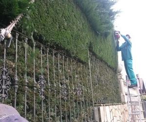 Todos los productos y servicios de Diseño y mantenimiento de jardines: Jardinería IGLE-MAN