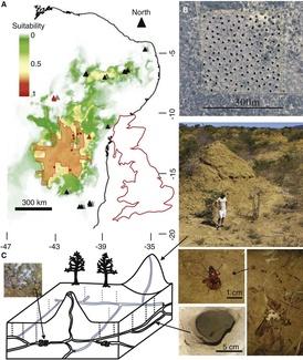 """""""Hallan en Brasil una «megaciudad» de termitas tan antigua como las pirámides"""""""