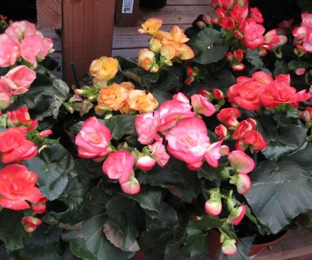 Plantas con flores para todo el año