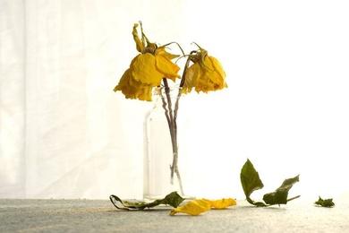 No plantes flores en los jardines de personas que no van a regarlas