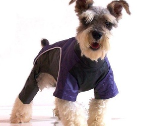ropa para mascotas puerto de sagunto