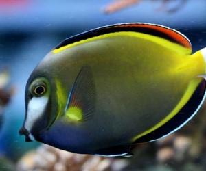 Aquariofilia marina
