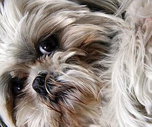 Motivos para poner un microchip a tu perro