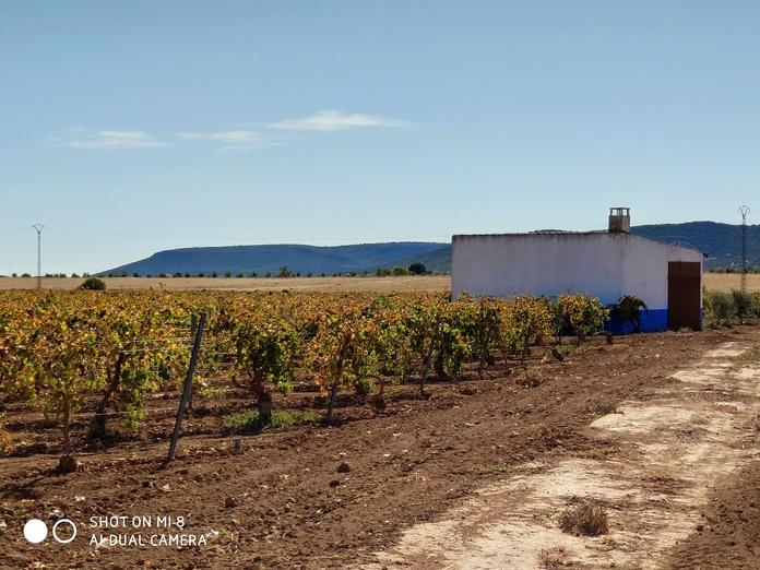 Venta de viña en espalderas regadio: Inmuebles Urbanos de ANTONIO ARAGONÉS DÍAZ PAVÓN