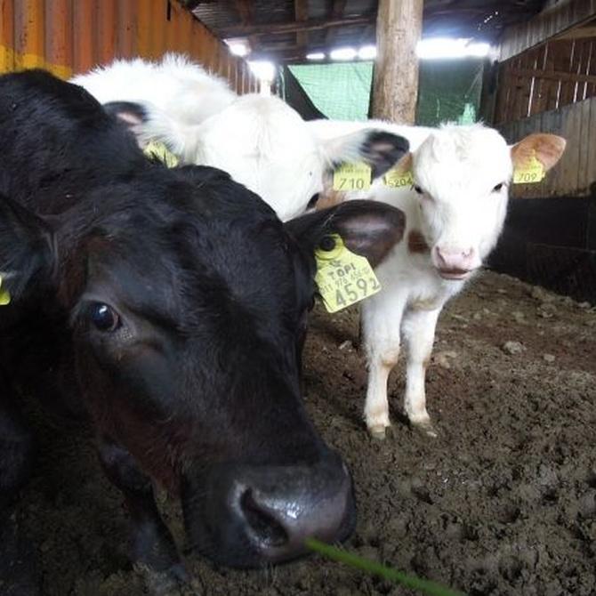 ¿De qué partes debe constar una nave de ganado? (I)