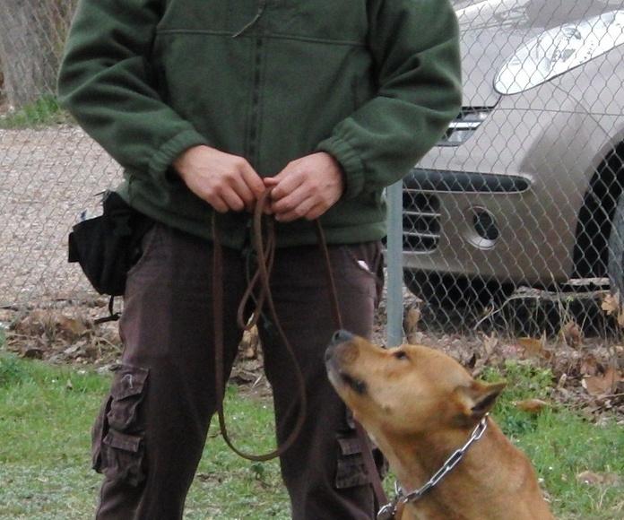 Centro de adiestramiento: Servicios de Centro Canino Unidos