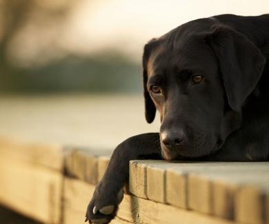 Síndrome postvacacional en el perro