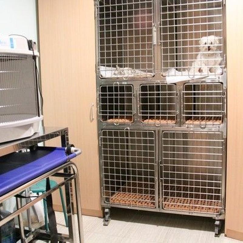 Servicios hospitalarios: Servicios de Megamascotas
