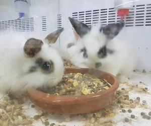 Conejos toys