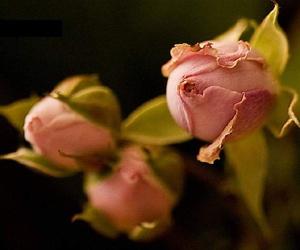 El estado naciente es puro y tiene su propio nombre y es necesario para florecer y crecer.