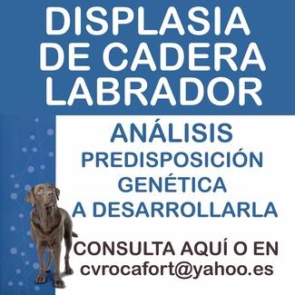 NOVEDADES EN PREVENCIÓN DE LA DISPLASIA DE CADERA
