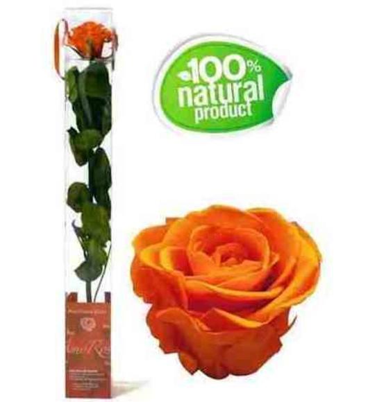 Rosa naranja eterna: Catálogo de Regalos de Floresdalia.com