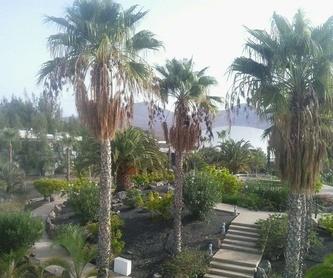 Nuevas plantaciones: Servicios de Palmito Palms And Gardens