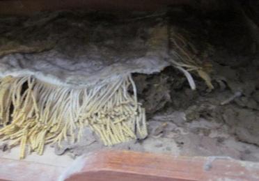 Termitas en muebles y tejidos