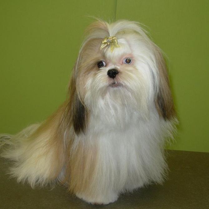 Caída del pelo anormal en perros