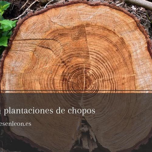 Limpieza de fincas en León: Excavaciones Marco A. Llamazares