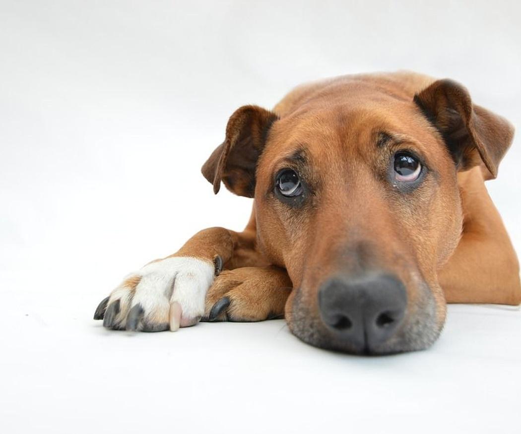Cómo cuidar a tu perro tras una operación