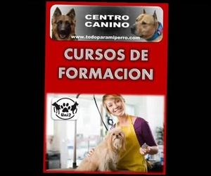 CURSO DE PELUQUERA CANINA CURSO DE ADIESTRADOR