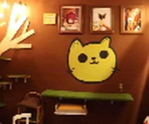 """Neko Neko un """"catcafe"""" creado desde el corazón"""