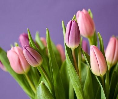 Consulta nuestra ofertas en tulipanes.