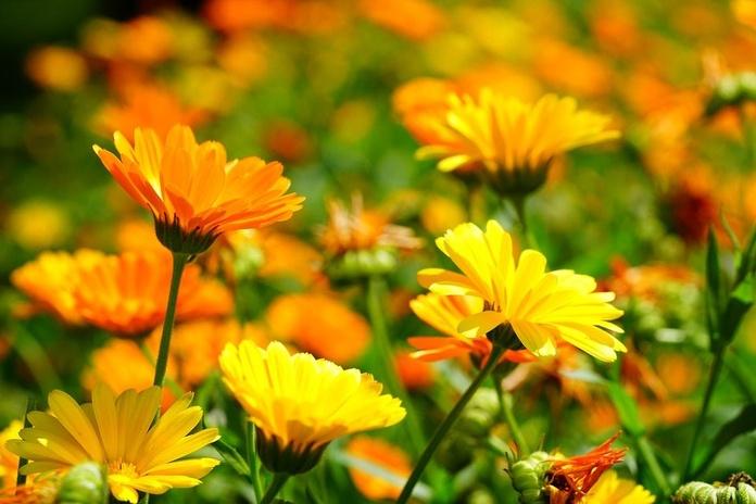 Consulta de Naturopatía y Nutrición: Servicios de Jacaranda Herbolario