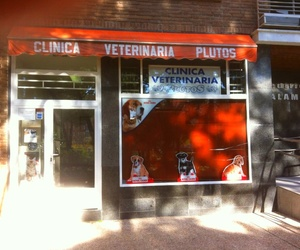 Clinica Veterinaria Plutos