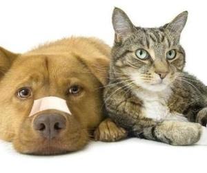 Cuidados y primeros auxilios para mascotas