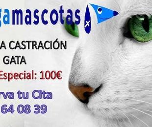 Campaña de castración Gatas en Molina del Segura ,