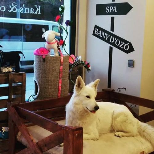 Peluquería para gatos y perros en Manresa