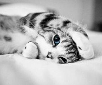 Artrosis en el gato
