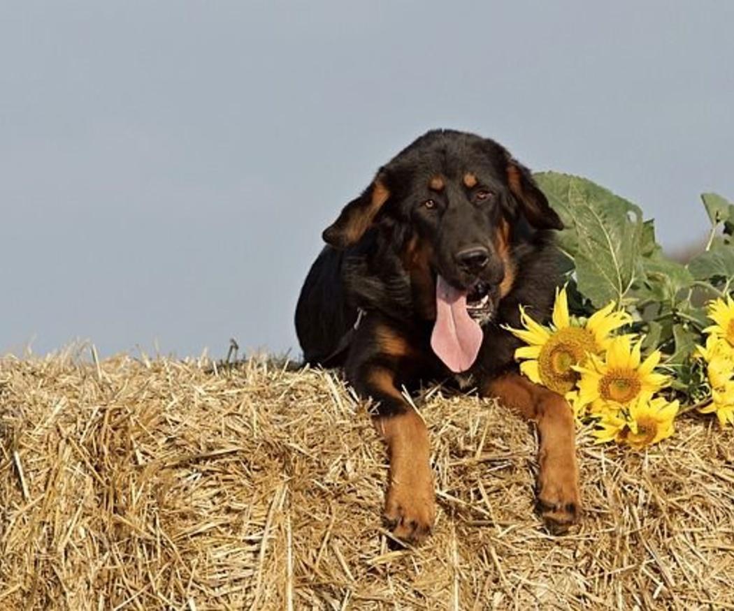 Consejos para nuestras mascotas en primavera